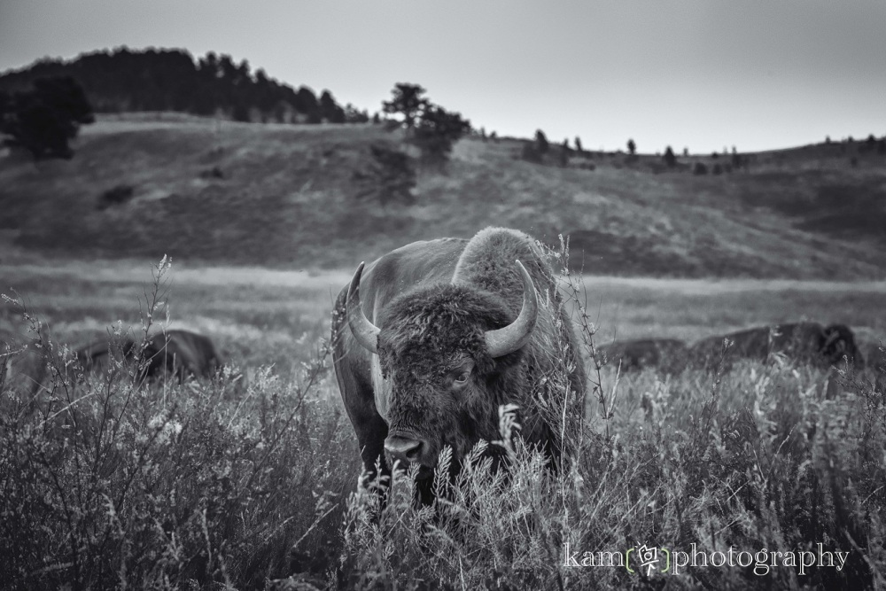 South Dakota nature photography black and white